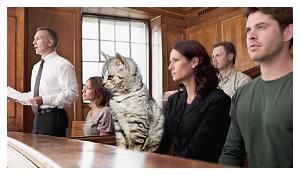 Cat on Jury!